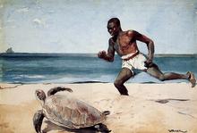 Turtles Paintings