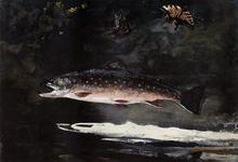 Trout Breaking - Winslow Homer